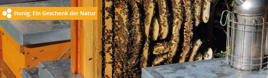 Warum echter Honig gesund ist und wo man ihn bekommt.